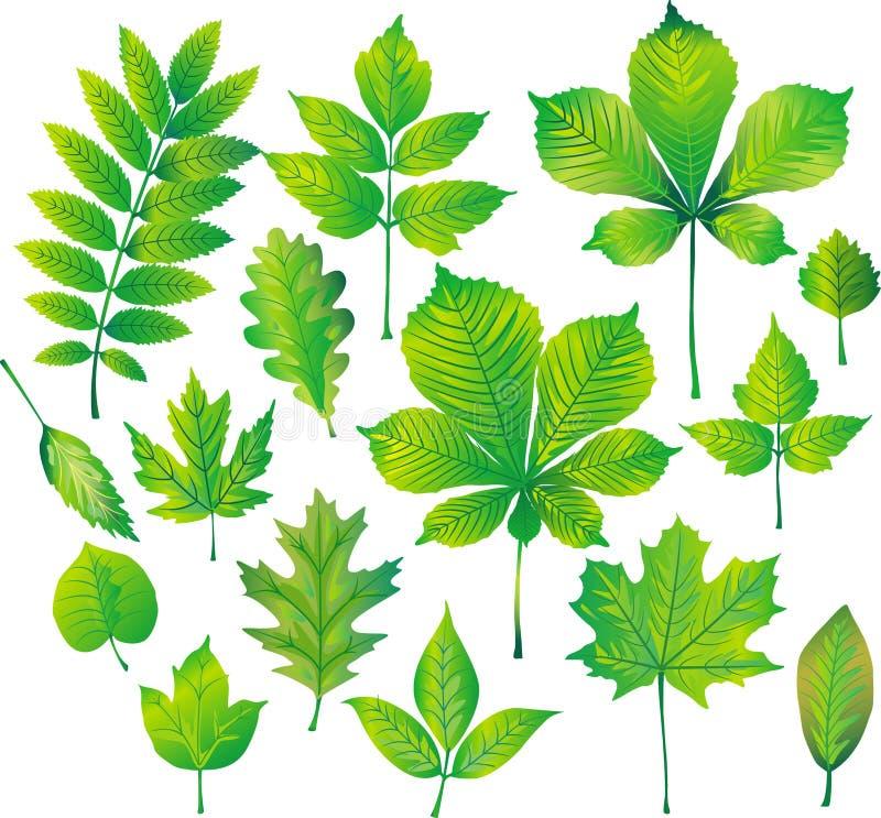 Reeks van groen blad stock illustratie