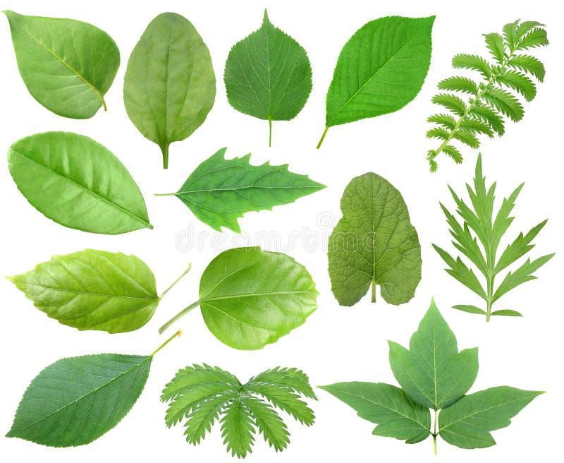 Reeks van groen blad stock foto