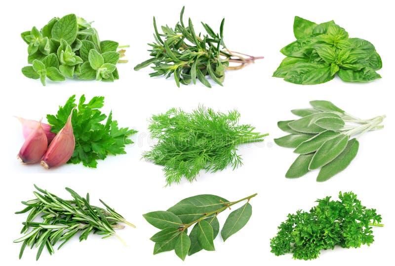 Reeks van groen kruid stock foto