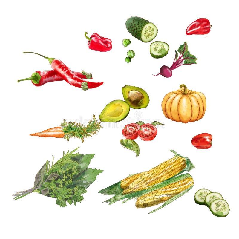 Reeks van groentenaquacolor royalty-vrije illustratie