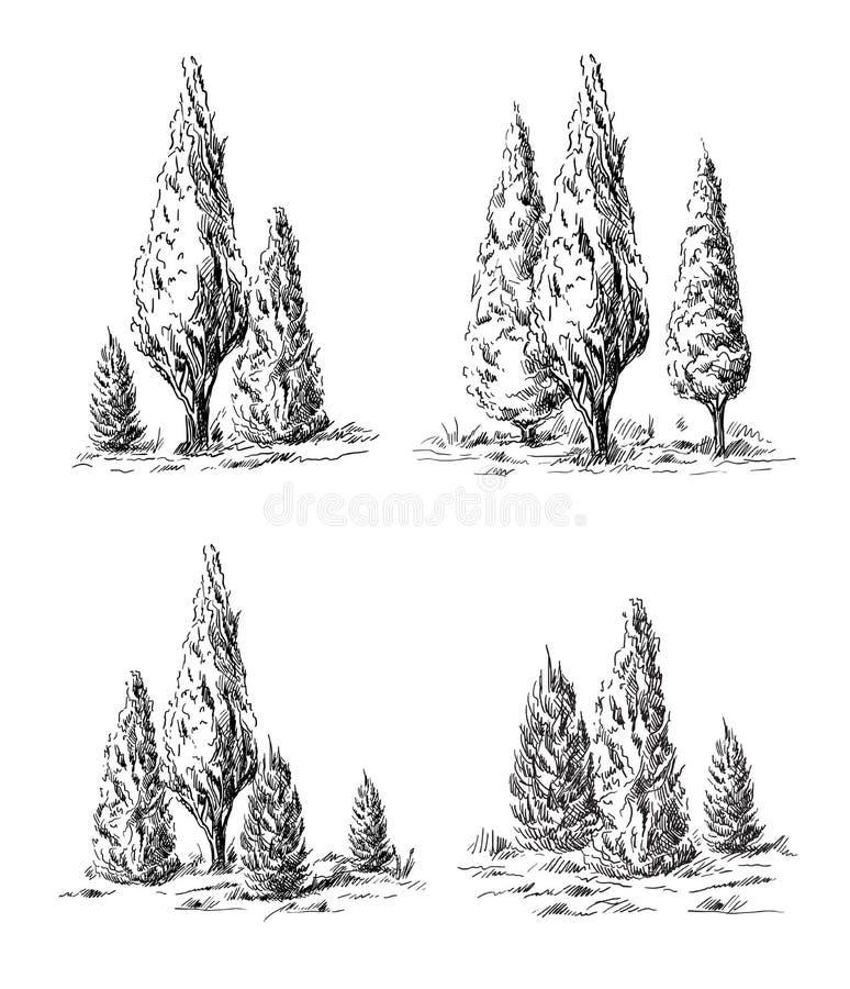 Reeks van hand-drawn cipres vector illustratie