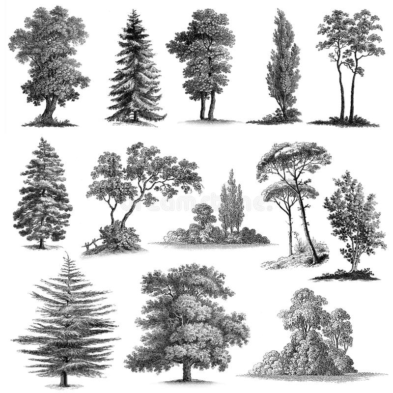Reeks van Hand 13 - gemaakte Uitstekende Bomen royalty-vrije illustratie