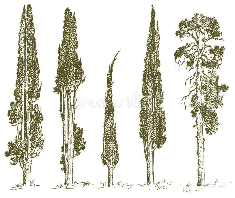 Reeks van hand getrokken bomen Italiaanse cipres en pijnboom vectorillustratie, gegraveerde altijdgroene symbolen van zuiden, stock illustratie
