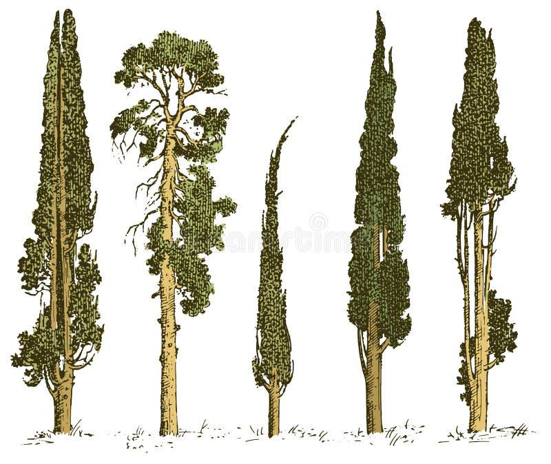 Reeks van hand getrokken bomen Italiaanse cipres en pijnboom vectorillustratie, gegraveerde altijdgroene symbolen van zuiden, royalty-vrije illustratie