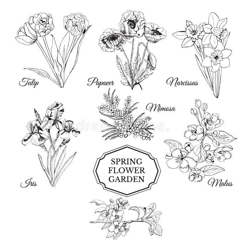 Reeks van hand getrokken grafische schets van de lentebloemen voor bloemtuin Iris, papaver, tulpen, narcissen, mimosa en malusblo