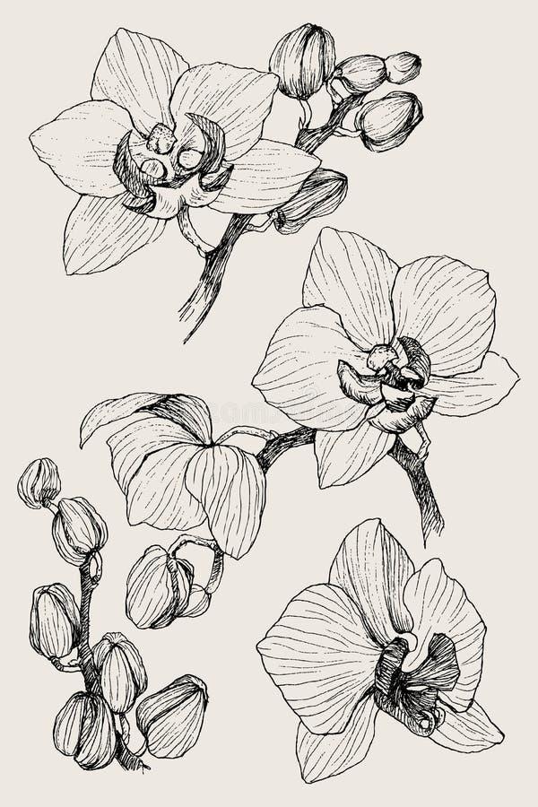 Reeks van hand getrokken zwarte overzichtsorchidee op een witte geïsoleerde achtergrond Hoogst gedetailleerde vectorillustratie M stock illustratie