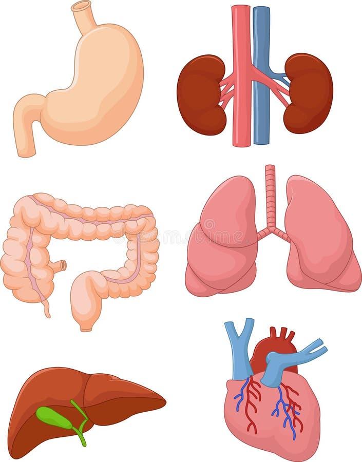 Reeks van het beeldverhaal de Interne orgaan vector illustratie