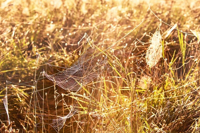 Reeks van het Web in de de herfst mistige ochtend stock afbeelding