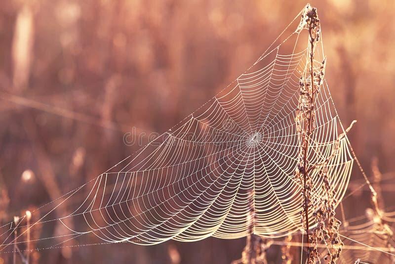 Reeks van het Web in de de herfst mistige ochtend royalty-vrije stock foto