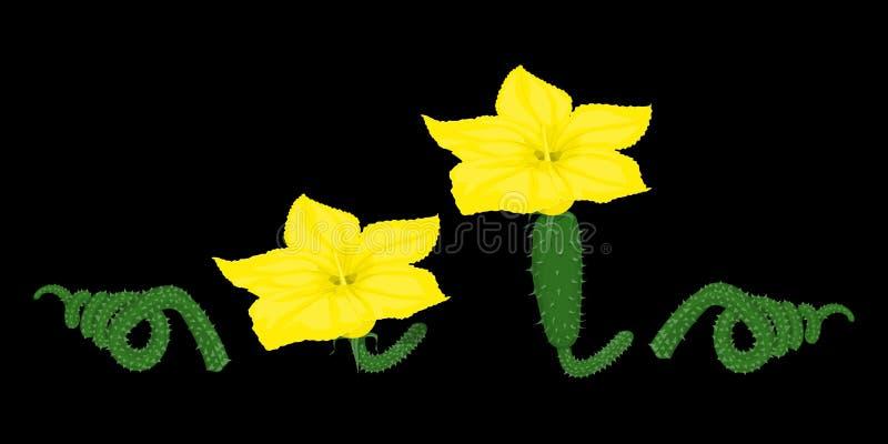 Reeks van isolate bloesem van komkommer royalty-vrije illustratie