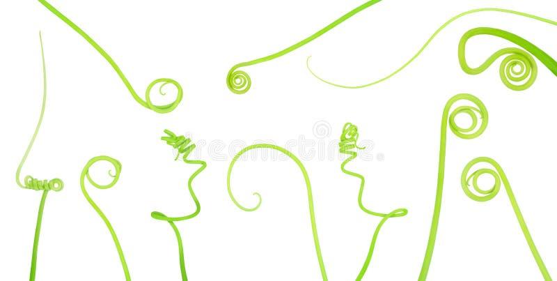Reeks van komkommer kruipende die stam op een wit wordt geïsoleerd royalty-vrije illustratie