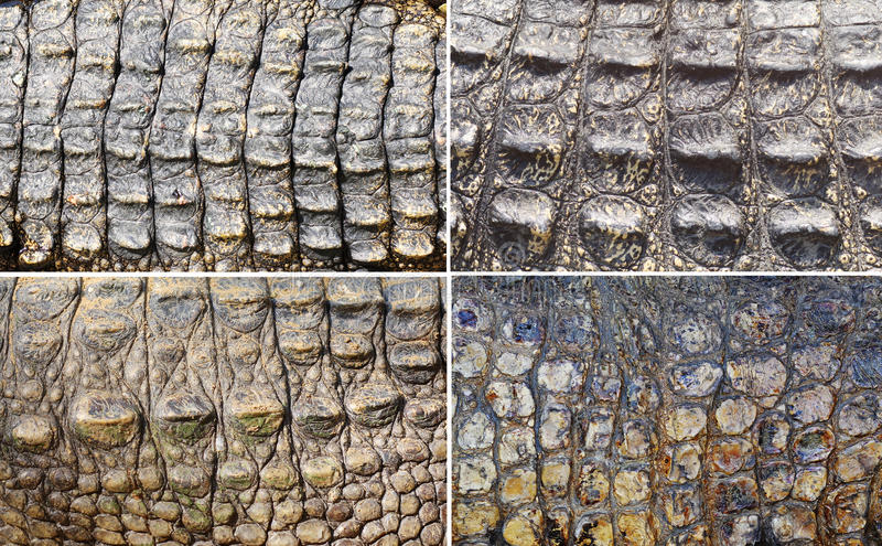 Reeks van krokodilhuid royalty-vrije stock afbeelding