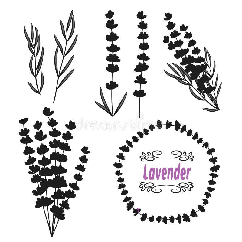 Reeks van lavendel Hand getrokken bos van lavendel, lavendelbloemen en bladeren stock illustratie