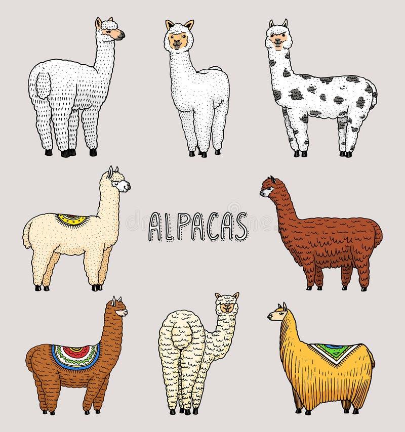 Reeks van leuke Alpacalama's of wilde guanaco op de achtergrond van Cactus en berg Grappige het glimlachen dieren in Peru voor royalty-vrije illustratie