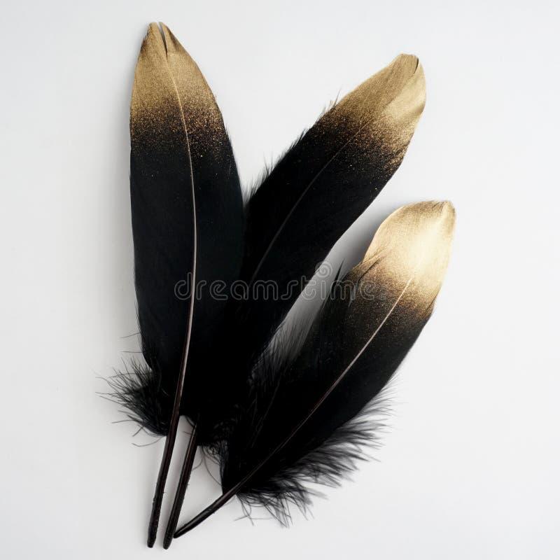 Reeks van luxe vergulde gouden gouden zwarte zwaanveer op witte achtergrond royalty-vrije stock foto