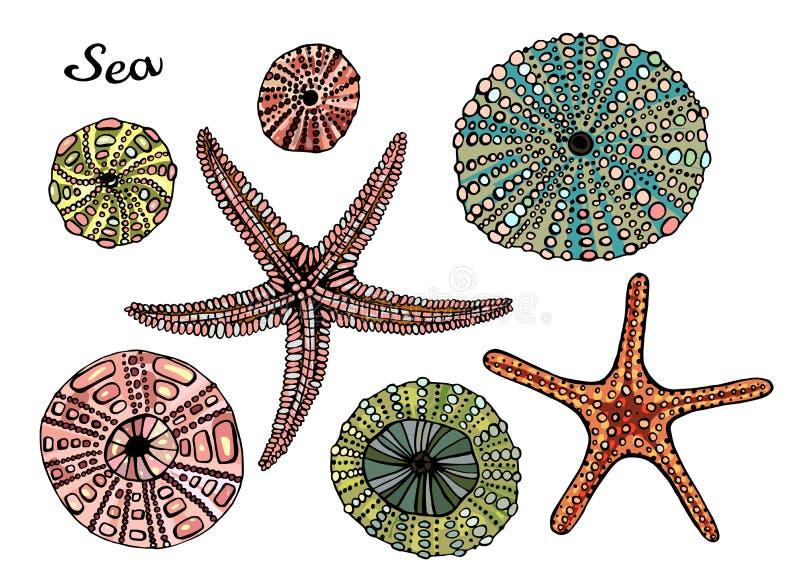 Reeks van marien thema Overzeese shells Verschillende zeeschelpen, zeester op witte achtergrond De stijl van de illustratieschets stock illustratie