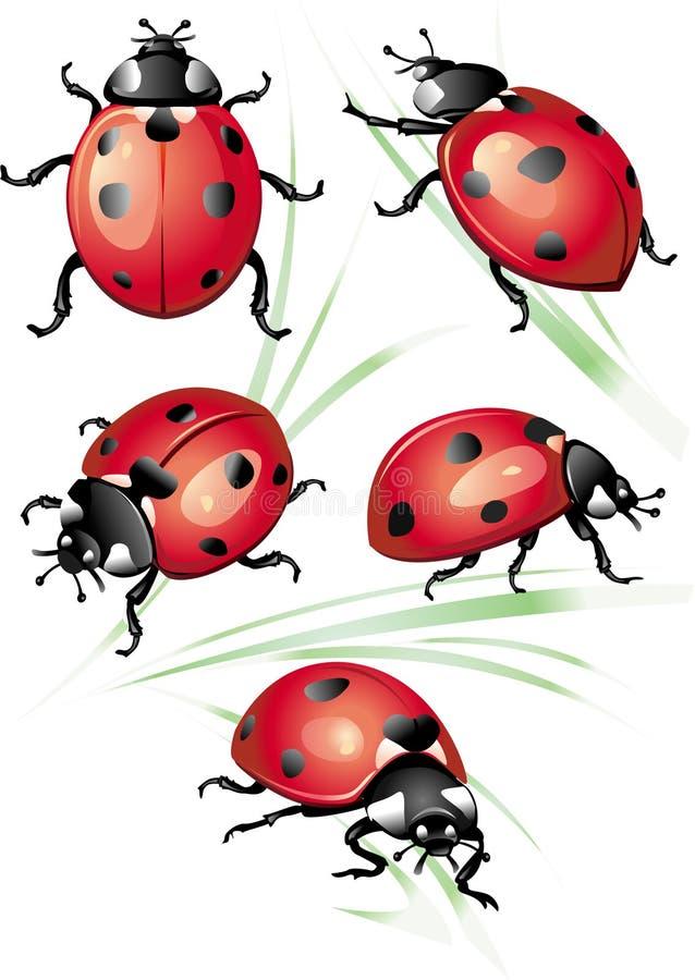 Reeks van onzelieveheersbeestje vector illustratie
