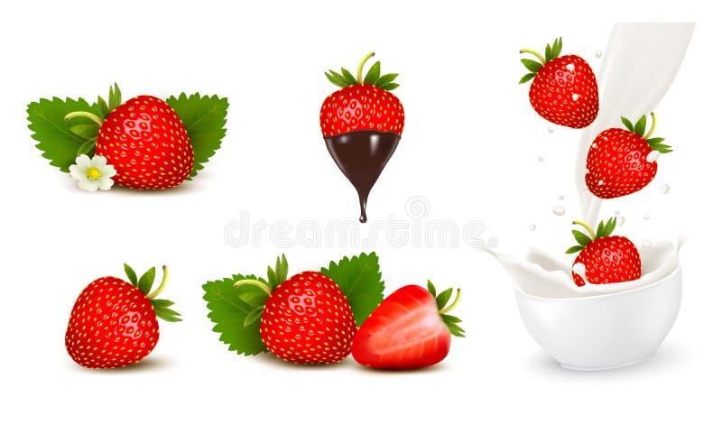 Reeks van rijpe zoete aardbei en bloem met bladeren en plons o vector illustratie