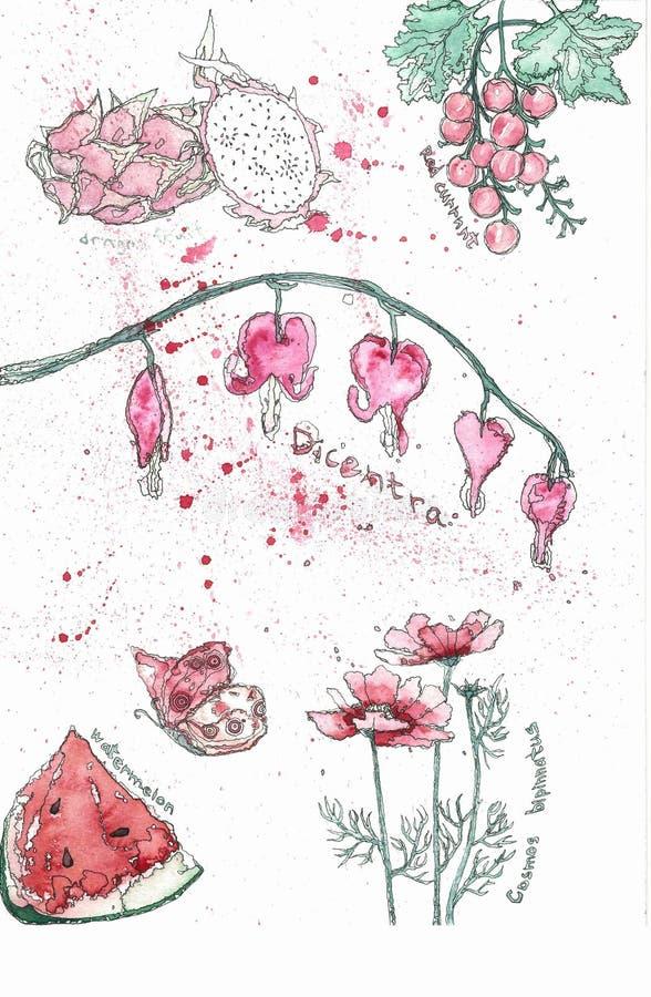 Reeks van roze bloemen watermellon draak fruite en vlinder Waterverf realistische botanische illustratie vector illustratie
