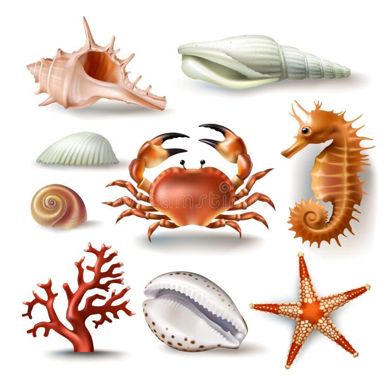 Reeks van vectorillustratieszeeschelpen, koraal, krab en zeester royalty-vrije illustratie