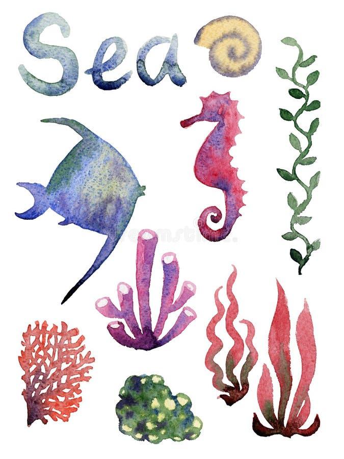 Reeks van verschillende overzeese shells, koralen en zeester royalty-vrije illustratie
