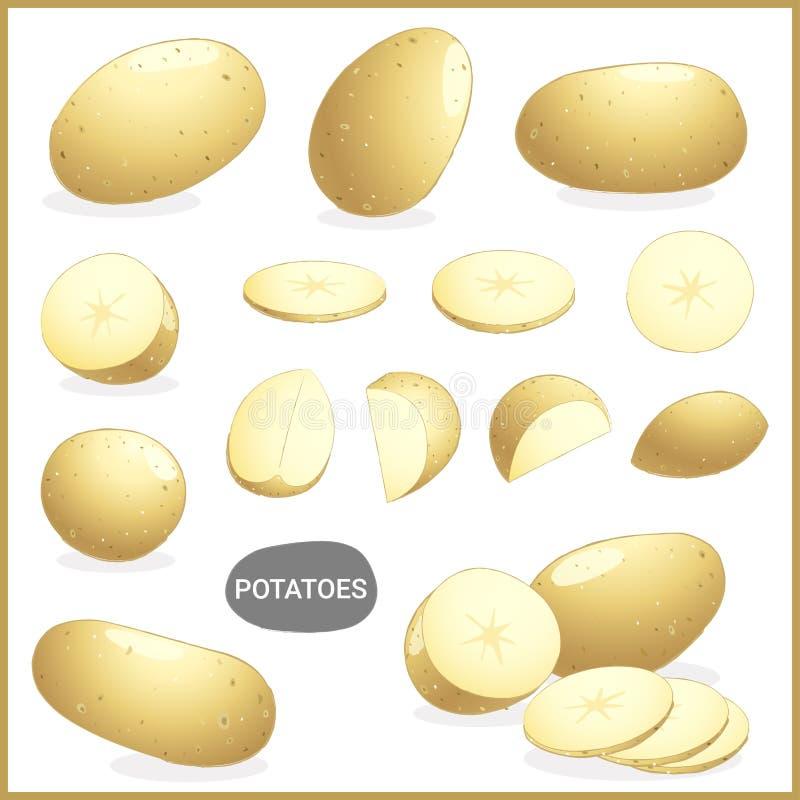 Reeks van verse aardappelsgroente met diverse besnoeiingen en stijlen in vectorillustratie stock illustratie