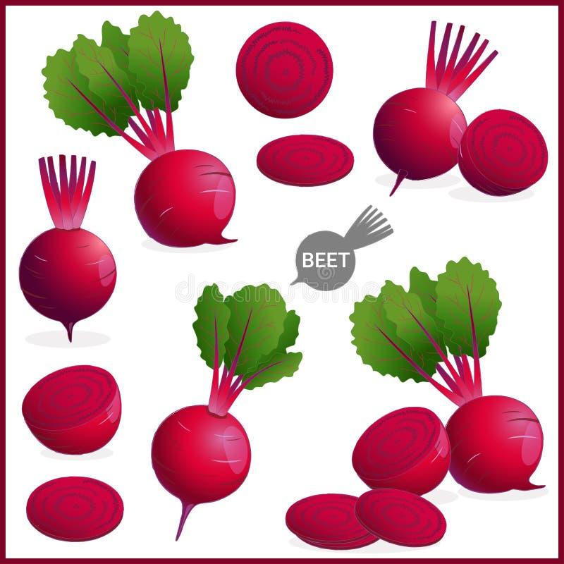 Reeks van verse biet of rode bietengroente met groene bladeren in diverse vormen en stijlen in vectorillustratie vector illustratie