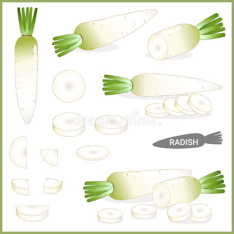 Reeks van verse witte radijs of daikon met groene bovenkant in diverse besnoeiingen en stijlen, vectorillustratie stock illustratie