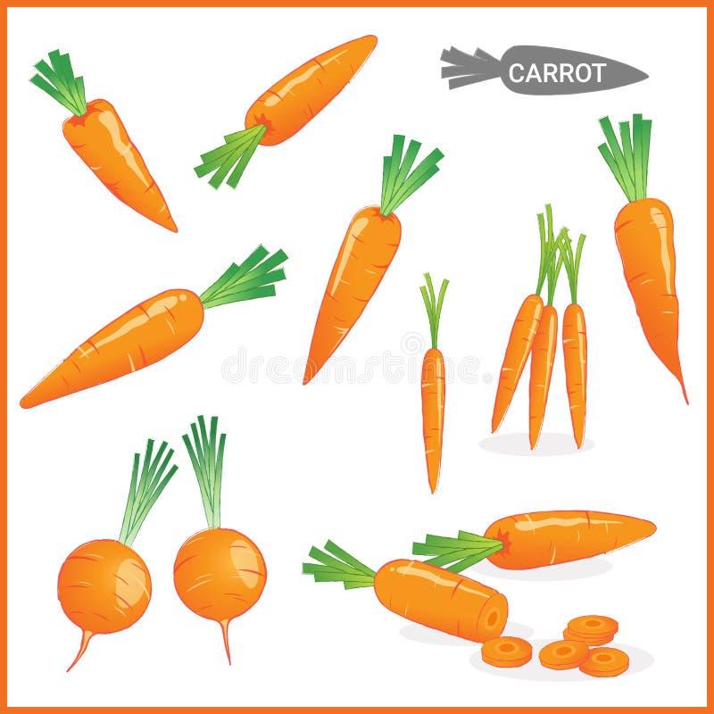 Reeks van verse wortelgroente met wortelbovenkanten in diverse besnoeiingen en stijlen in vectorillustratie royalty-vrije illustratie