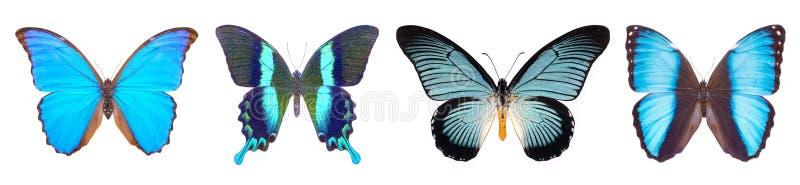 Reeks van vier blauwe, mooie vlinders stock afbeelding