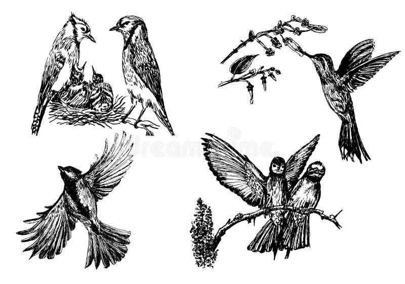 Reeks van vier geïsoleerde vogelcijfers, hand getrokken illustratie vector illustratie