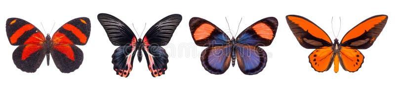 Reeks van vier kleurrijke en mooie vlinders stock foto's
