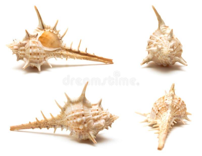 Reeks van vier zeeschelpenmacro stock foto's