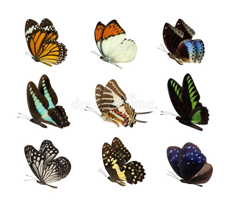 Reeks van vlinder op wit wordt geïsoleerd dat stock foto's