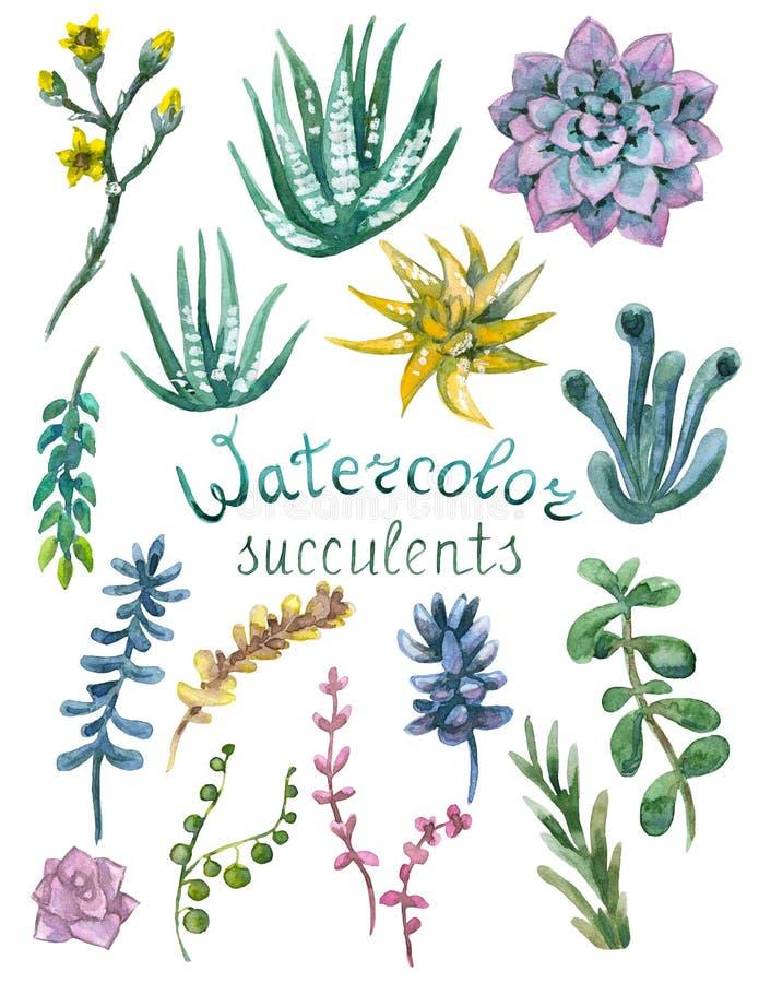 Reeks van waterverf succulents
