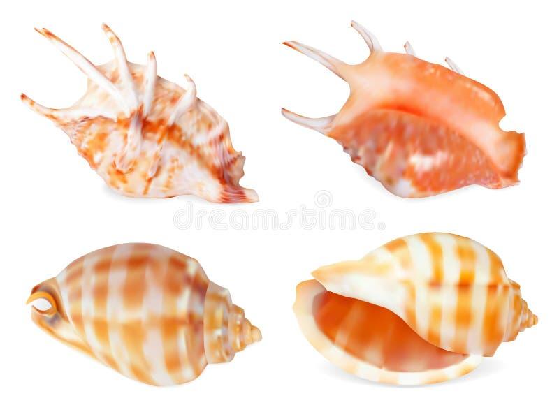 Reeks van Zeeschelp vector illustratie