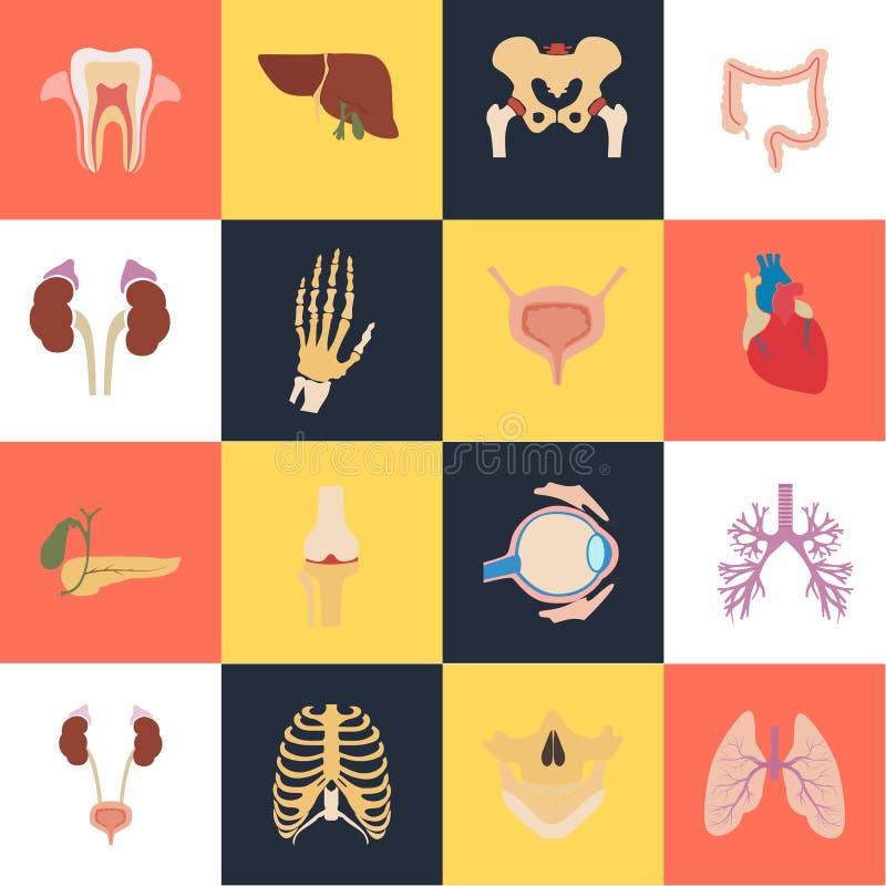 Reeks van zestien menselijke organen en de anatomische vlakke pictogrammen van de delenkleur vector illustratie