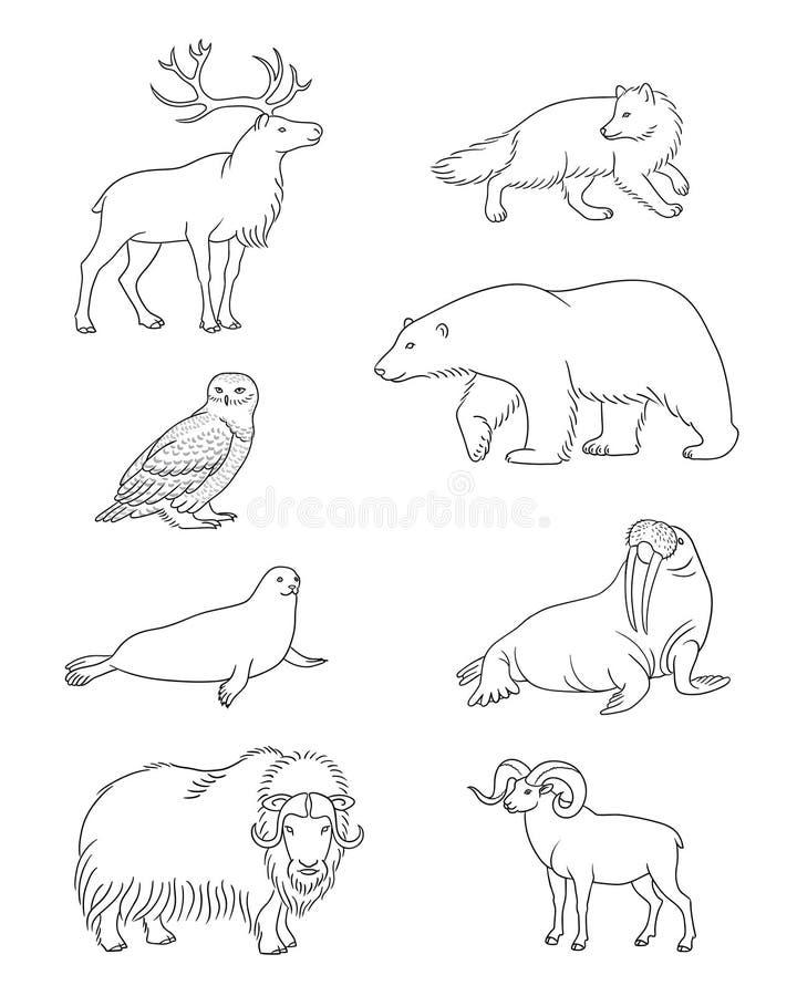 Reeks vector Noordpooldieren in contouren vector illustratie