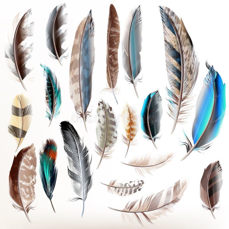 Reeks vector realistische kleurrijke veren vector illustratie