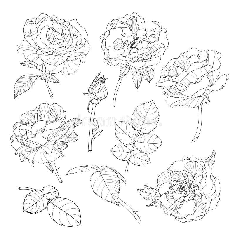 Reeks vector roze bloemen De zwart-witte getrokken overzichtshand nam bloemen toe stock illustratie