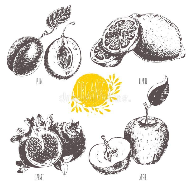 Reeks - vectorfruit en kruiden Het gezicht van Hand-drawn vrouwen illustration schets Gezond voedsel Lineaire grafisch royalty-vrije illustratie
