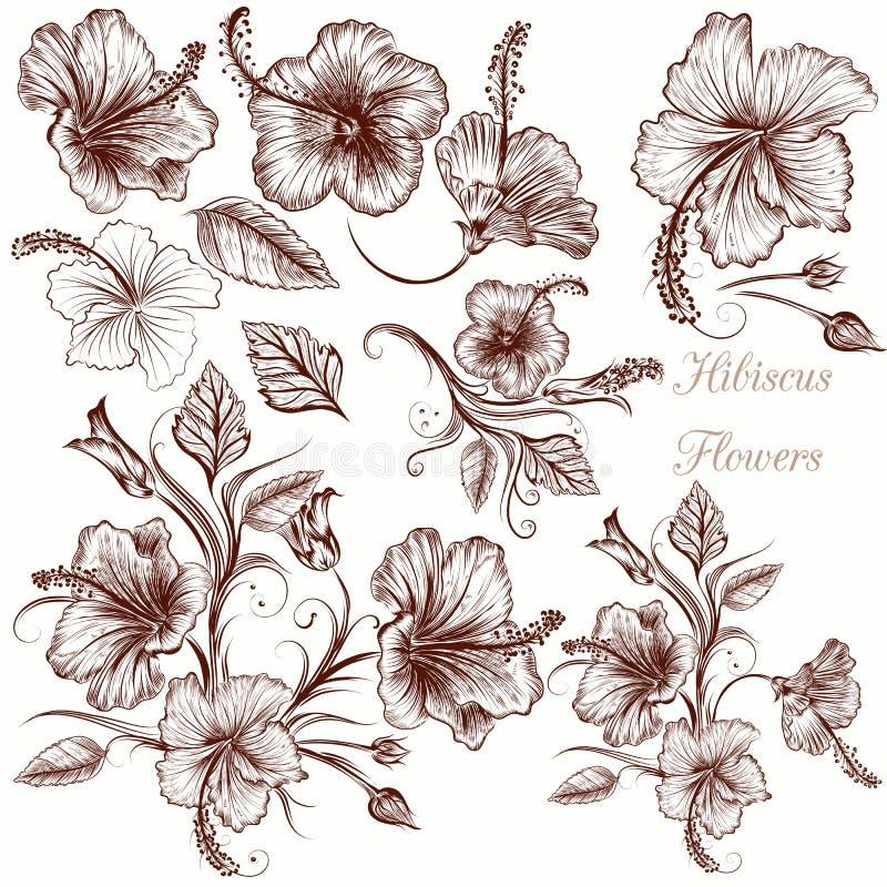 Reeks vectorhand getrokken hibiscusbloemen royalty-vrije illustratie