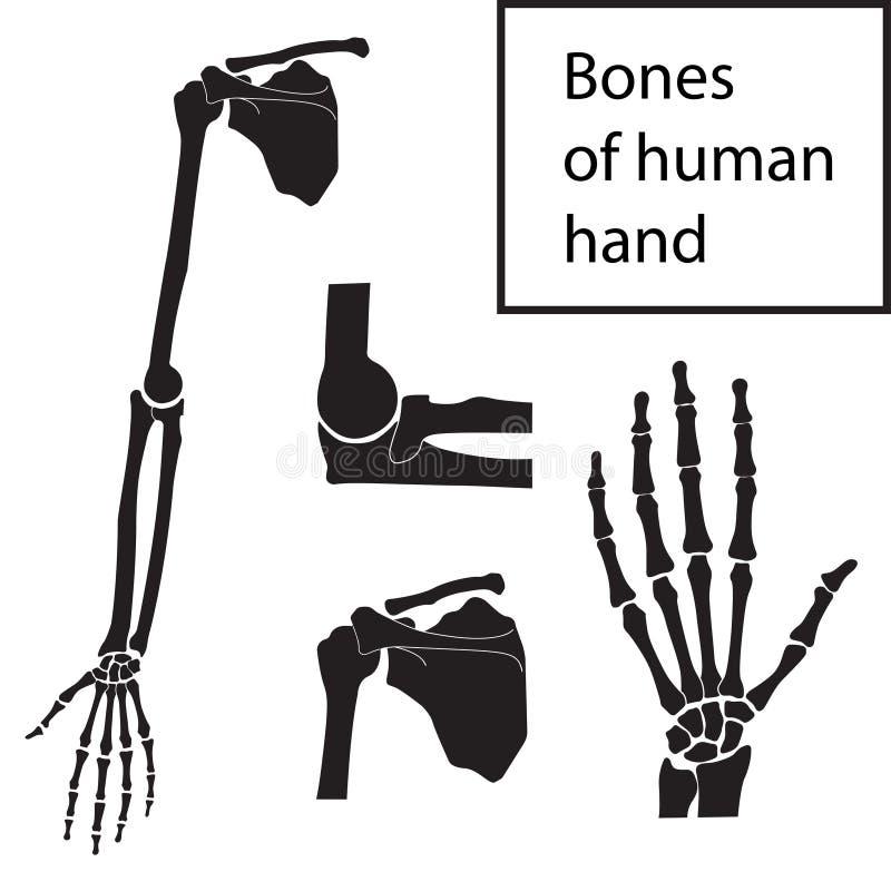 Reeks vectorillustraties van menselijke hand skeletachtige anatomie stock illustratie