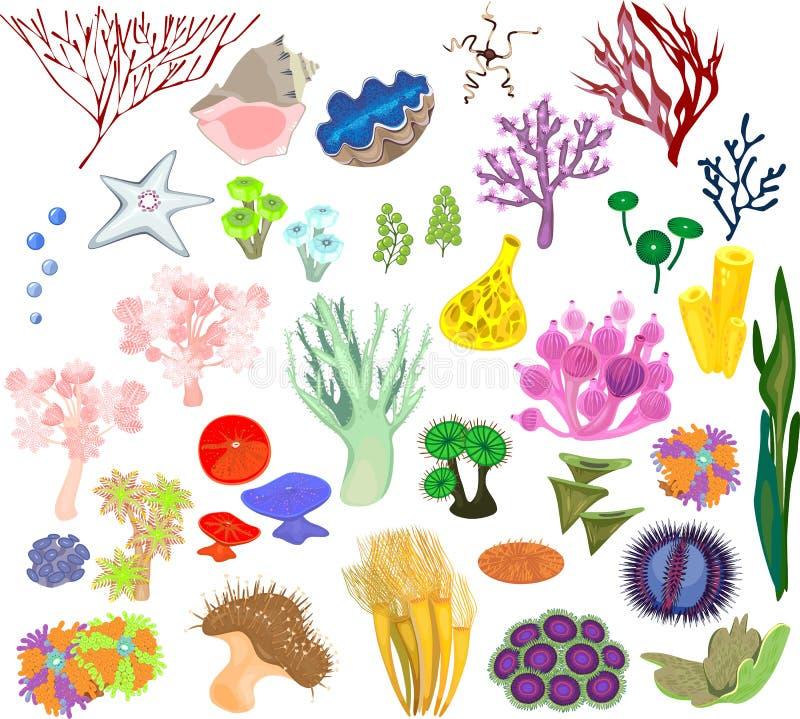 Reeks verschillend soort van zachte koralen en mariene ongewervelden op witte achtergrond royalty-vrije illustratie