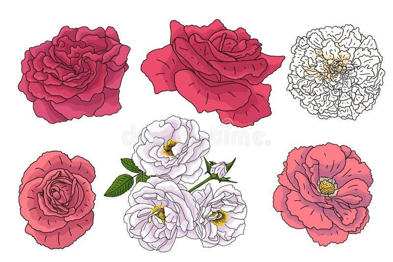 Reeks verschillende bloemen in krabbelstijl Hand getrokken elementen voor huwelijks bloemenontwerp, vectorillustratie De Bloesem  royalty-vrije illustratie