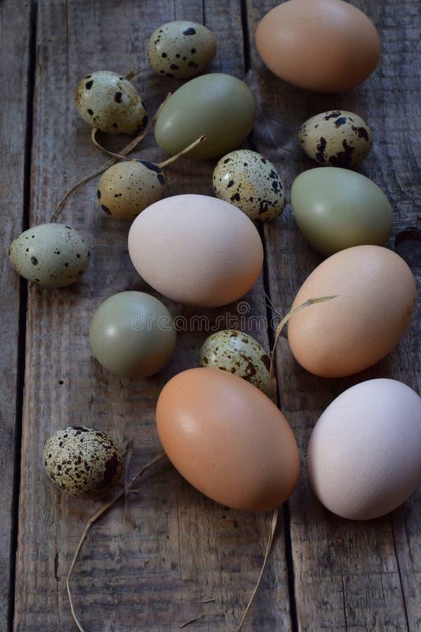 Reeks verschillende eieren van typesvogels van kip, fazant en kwartels met veren op een houten achtergrond stock foto
