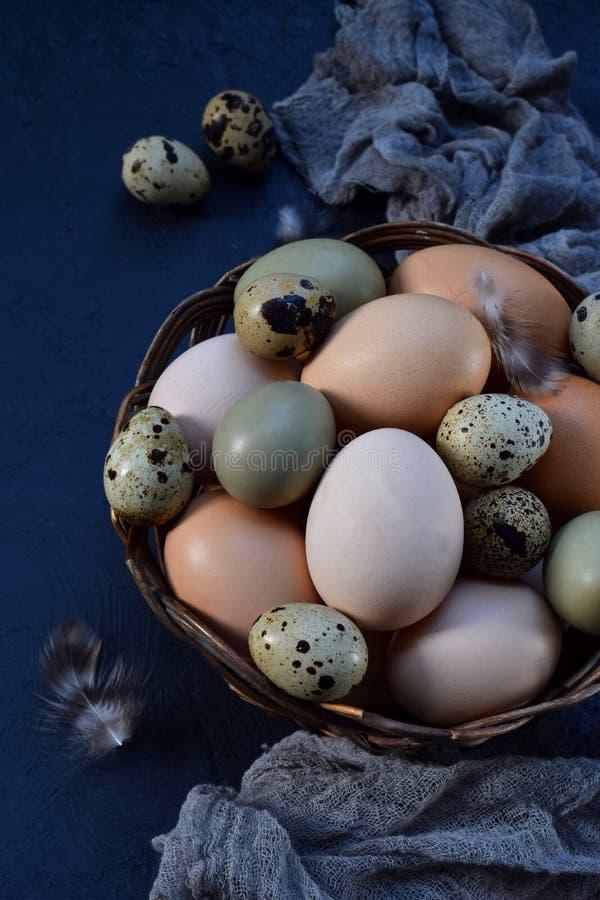 Reeks verschillende eieren van typesvogels van kip, fazant en kwartels op een donkere achtergrond royalty-vrije stock foto