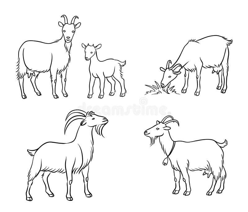 Reeks verschillende geiten in contouren - vectorillustratie stock afbeelding