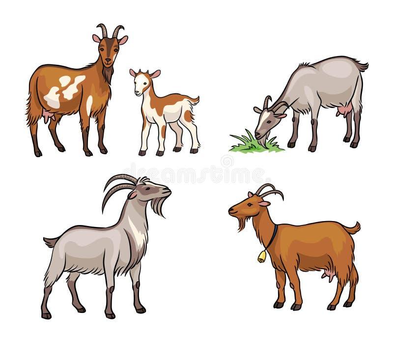 Reeks verschillende geiten - vectorillustratie royalty-vrije stock afbeeldingen