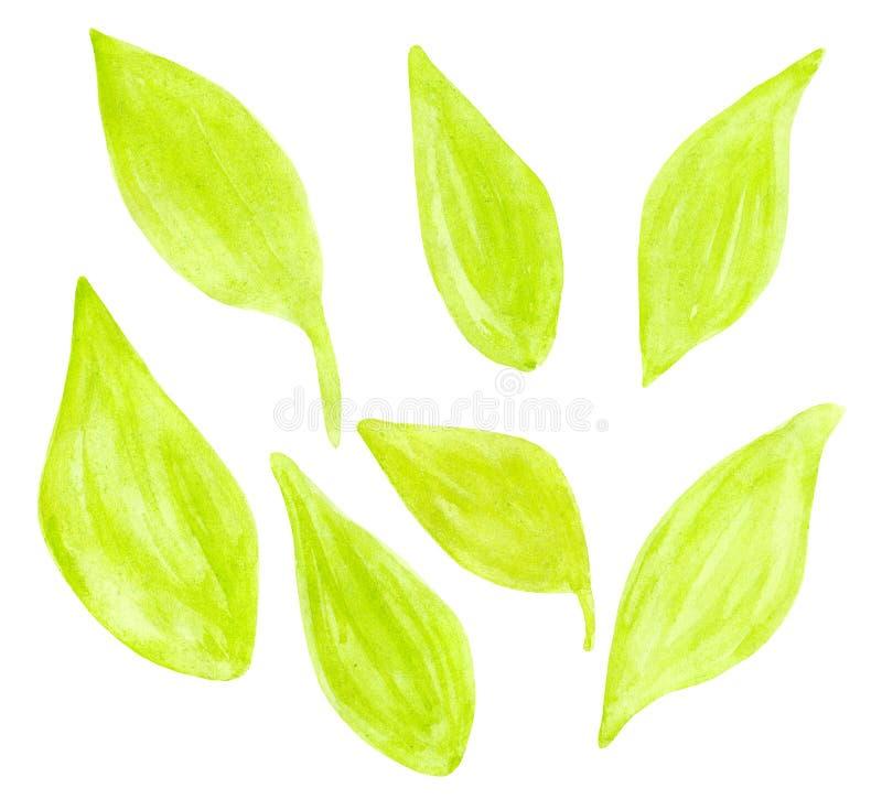 Reeks verschillende gevormde geelgroene de herfstbladeren stock afbeeldingen